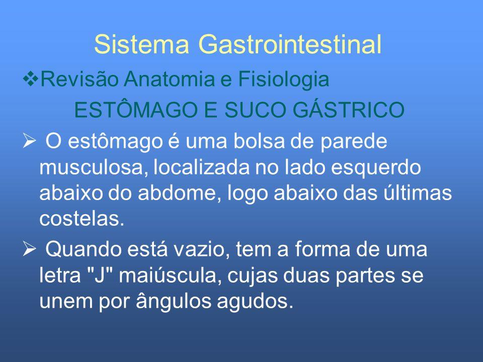 Sistema Gastrointestinal Revisão Anatomia e Fisiologia ESTÔMAGO E SUCO GÁSTRICO O estômago é uma bolsa de parede musculosa, localizada no lado esquerd