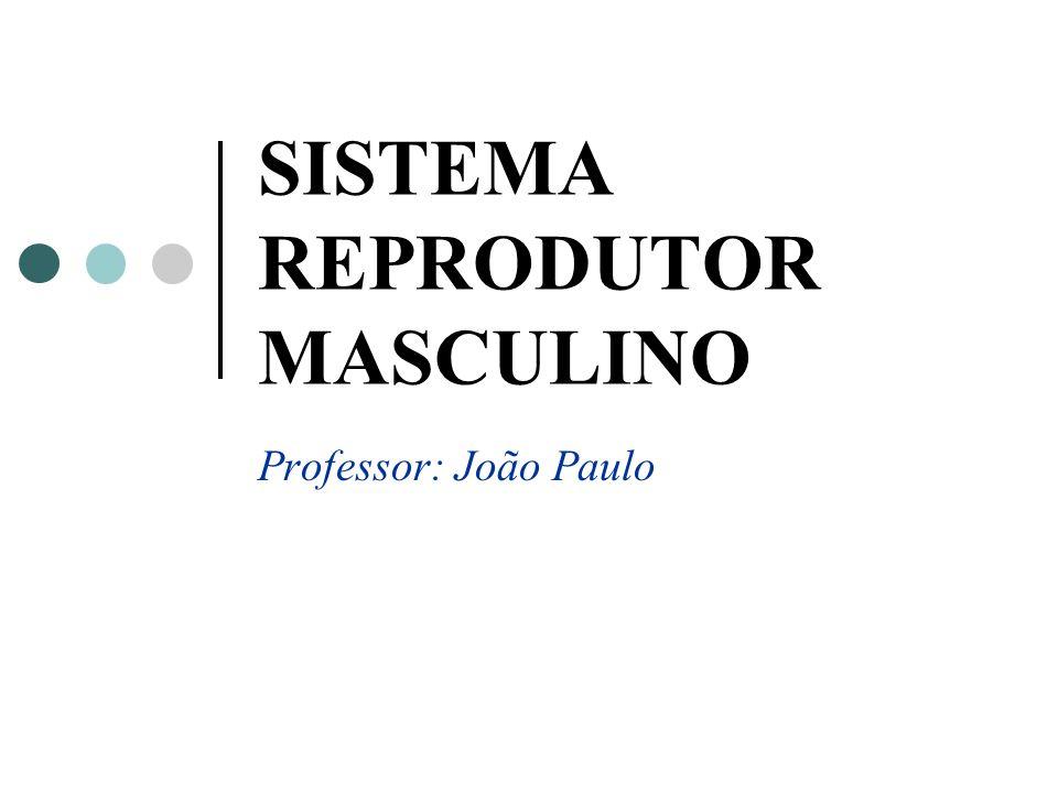 SISTEMA REPRODUTOR MASCULINO Professor: João Paulo