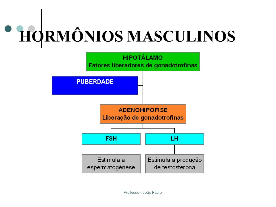 Professor: João Paulo HORMÔNIOS MASCULINOS