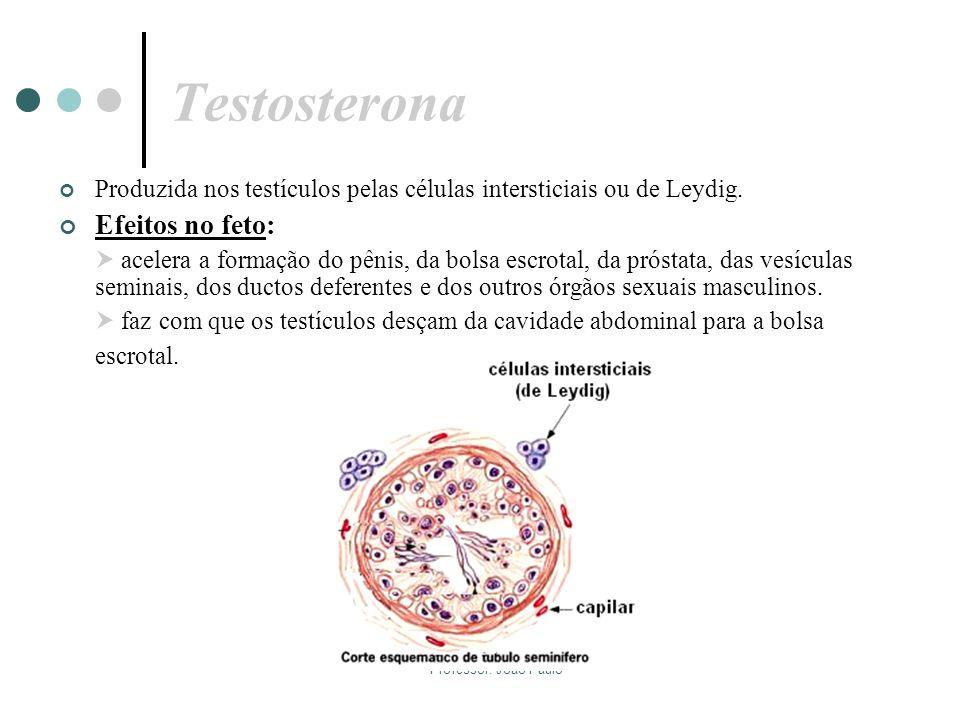 Professor: João Paulo Testosterona Produzida nos testículos pelas células intersticiais ou de Leydig. Efeitos no feto: acelera a formação do pênis, da