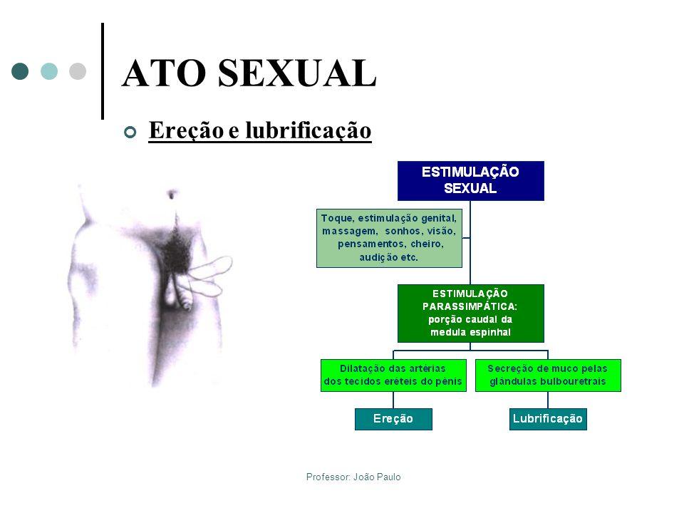 Professor: João Paulo ATO SEXUAL Ereção e lubrificação