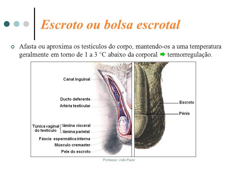 Professor: João Paulo Escroto ou bolsa escrotal Afasta ou aproxima os testículos do corpo, mantendo-os a uma temperatura geralmente em torno de 1 a 3
