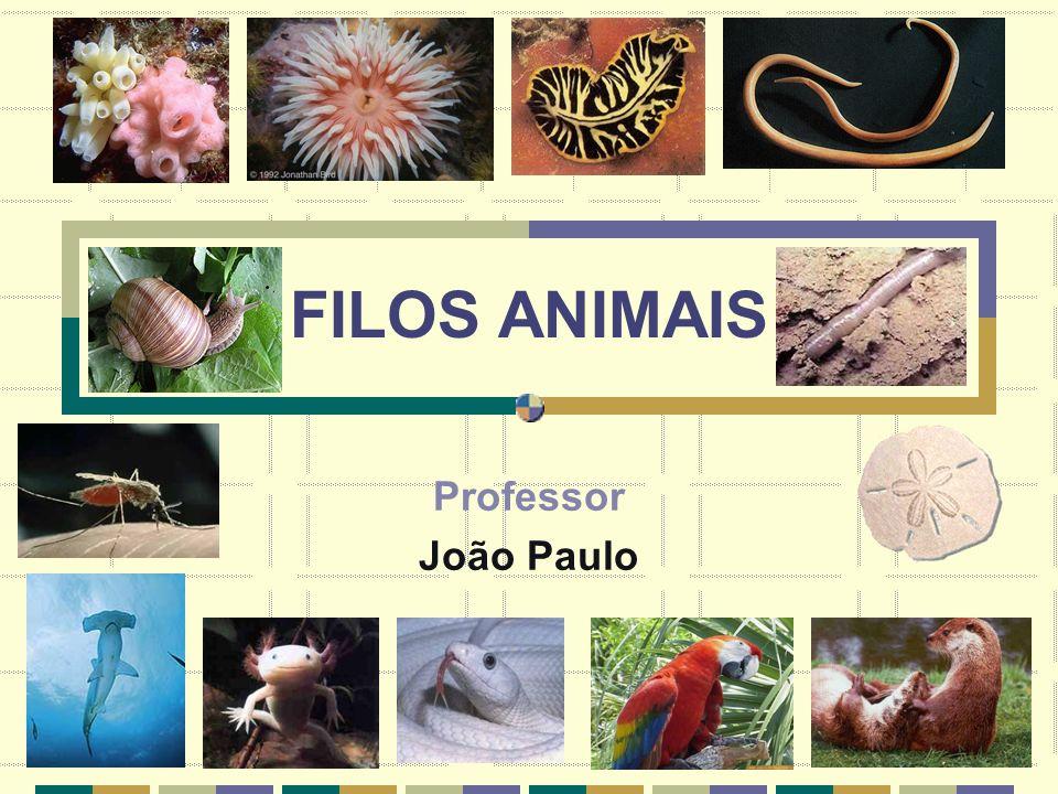Professor: João Paulo FILO PORIFERA Constitu í do pelas esponjas animais s é sseis (fixos) que vivem em ambiente aqu á tico.