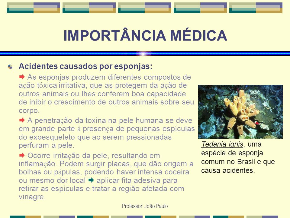 Professor: João Paulo IMPORTÂNCIA MÉDICA Acidentes causados por esponjas: As esponjas produzem diferentes compostos de a ç ão t ó xica irritativa, que