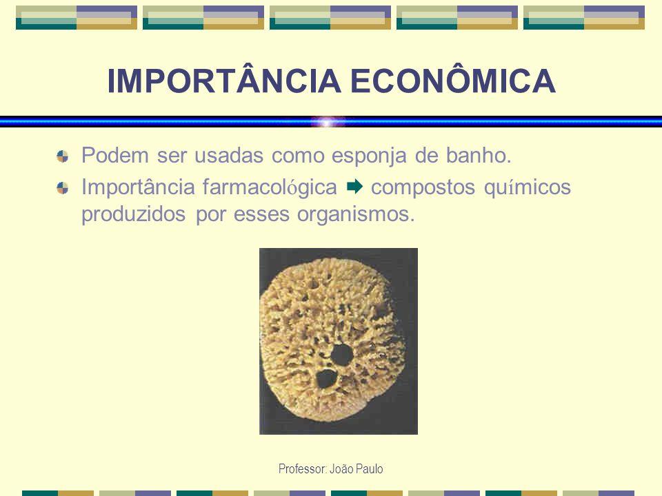 Professor: João Paulo IMPORTÂNCIA ECONÔMICA Podem ser usadas como esponja de banho. Importância farmacol ó gica compostos qu í micos produzidos por es