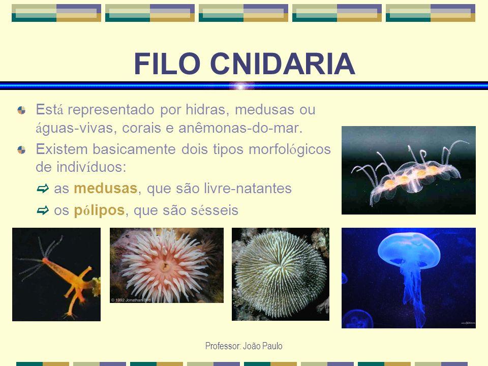 Professor: João Paulo FILO CNIDARIA Est á representado por hidras, medusas ou á guas-vivas, corais e anêmonas-do-mar. Existem basicamente dois tipos m