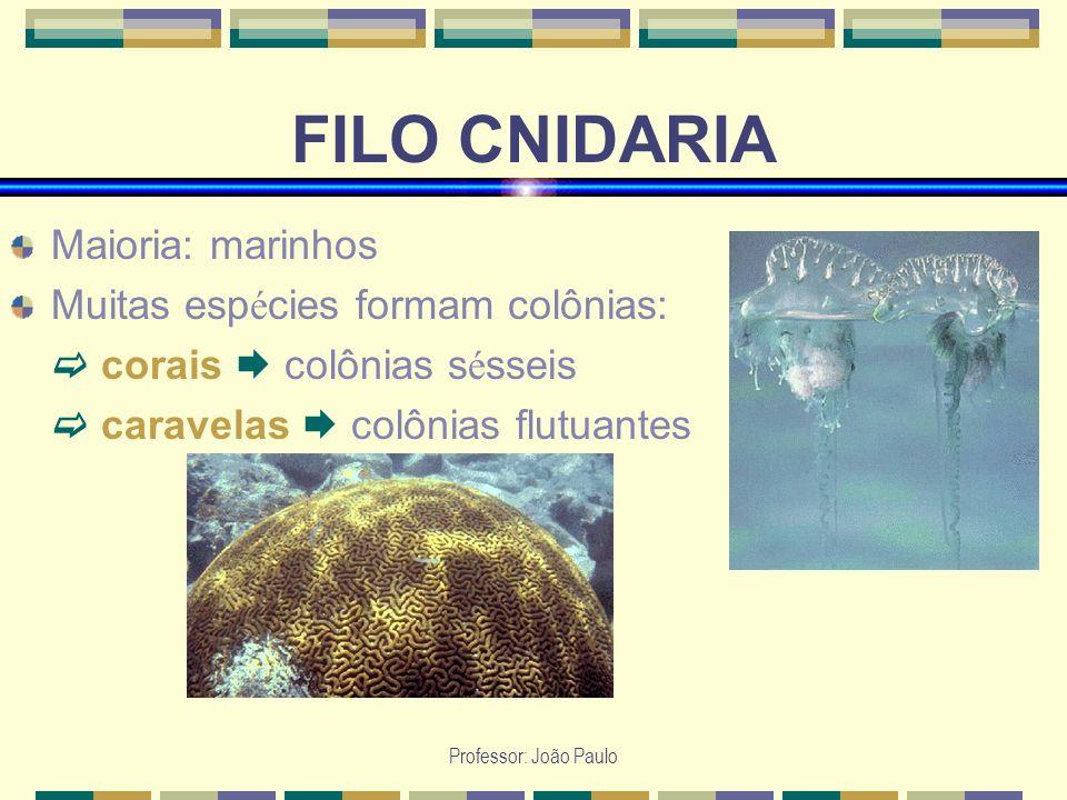 Professor: João Paulo FILO CNIDARIA Maioria: marinhos Muitas esp é cies formam colônias: corais colônias s é sseis caravelas colônias flutuantes