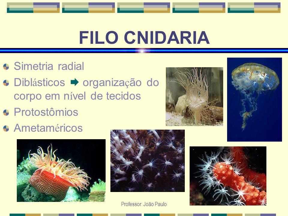 Professor: João Paulo FILO CNIDARIA Simetria radial Dibl á sticos organiza ç ão do corpo em n í vel de tecidos Protostômios Ametam é ricos