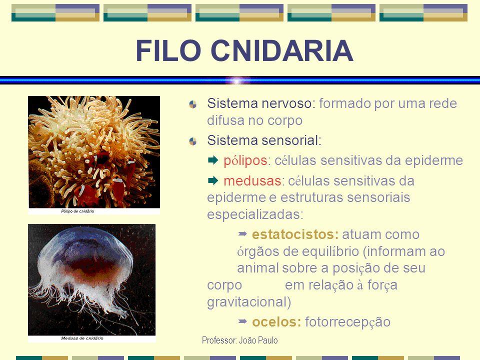 Professor: João Paulo FILO CNIDARIA Sistema nervoso: formado por uma rede difusa no corpo Sistema sensorial: p ó lipos: c é lulas sensitivas da epider