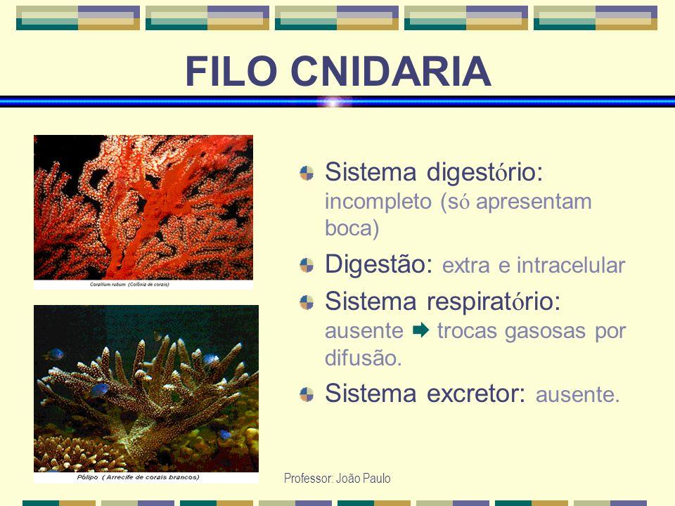 Professor: João Paulo FILO CNIDARIA Sistema digest ó rio: incompleto (s ó apresentam boca) Digestão: extra e intracelular Sistema respirat ó rio: ause