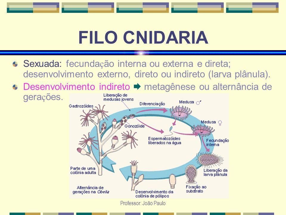 Professor: João Paulo FILO CNIDARIA Sexuada: fecunda ç ão interna ou externa e direta; desenvolvimento externo, direto ou indireto (larva plânula). De