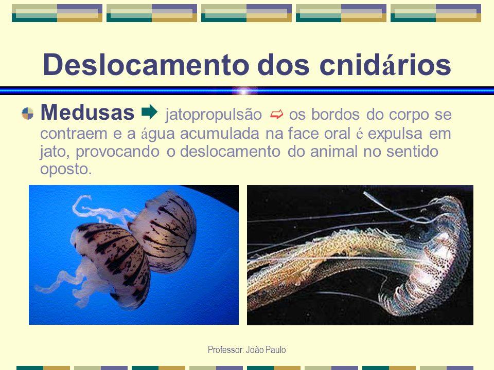 Professor: João Paulo Deslocamento dos cnid á rios Medusas jatopropulsão os bordos do corpo se contraem e a á gua acumulada na face oral é expulsa em