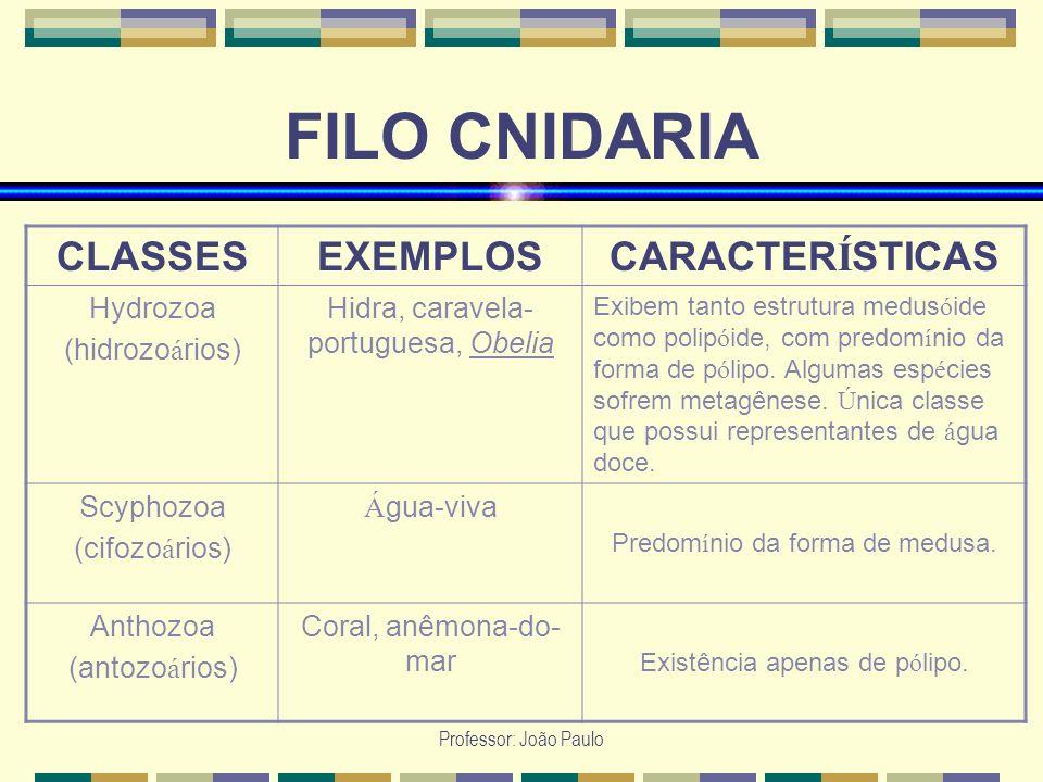 Professor: João Paulo FILO CNIDARIA CLASSESEXEMPLOSCARACTER Í STICAS Hydrozoa (hidrozo á rios) Hidra, caravela- portuguesa, Obelia Exibem tanto estrut