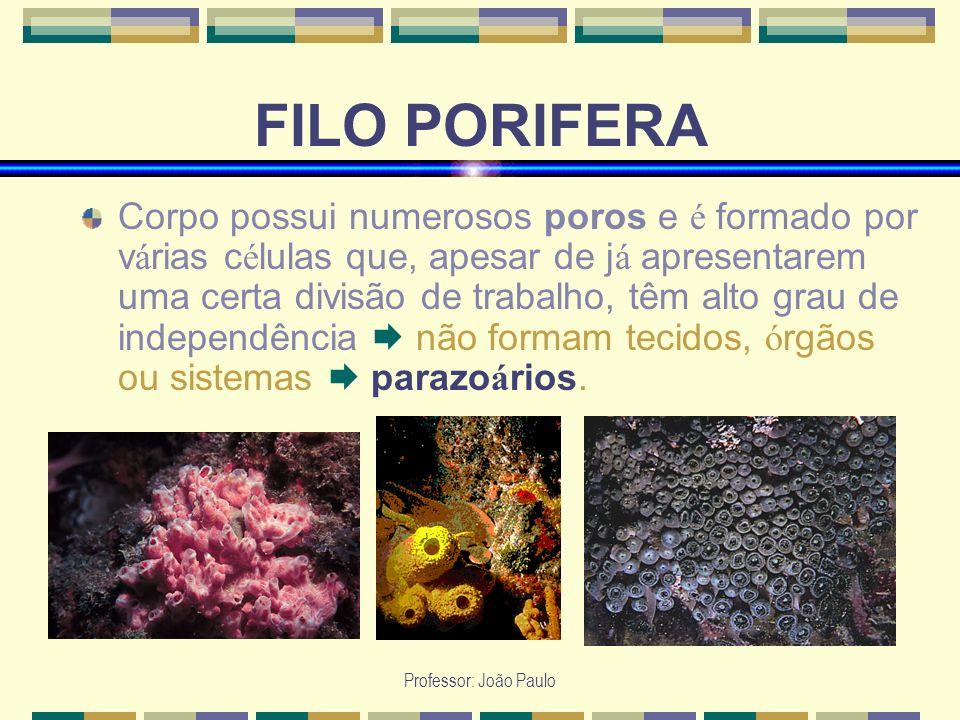 Professor: João Paulo FILO PORIFERA Corpo possui numerosos poros e é formado por v á rias c é lulas que, apesar de j á apresentarem uma certa divisão
