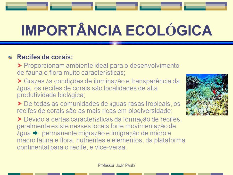 Professor: João Paulo IMPORTÂNCIA ECOL Ó GICA Recifes de corais: Proporcionam ambiente ideal para o desenvolvimento de fauna e flora muito caracter í