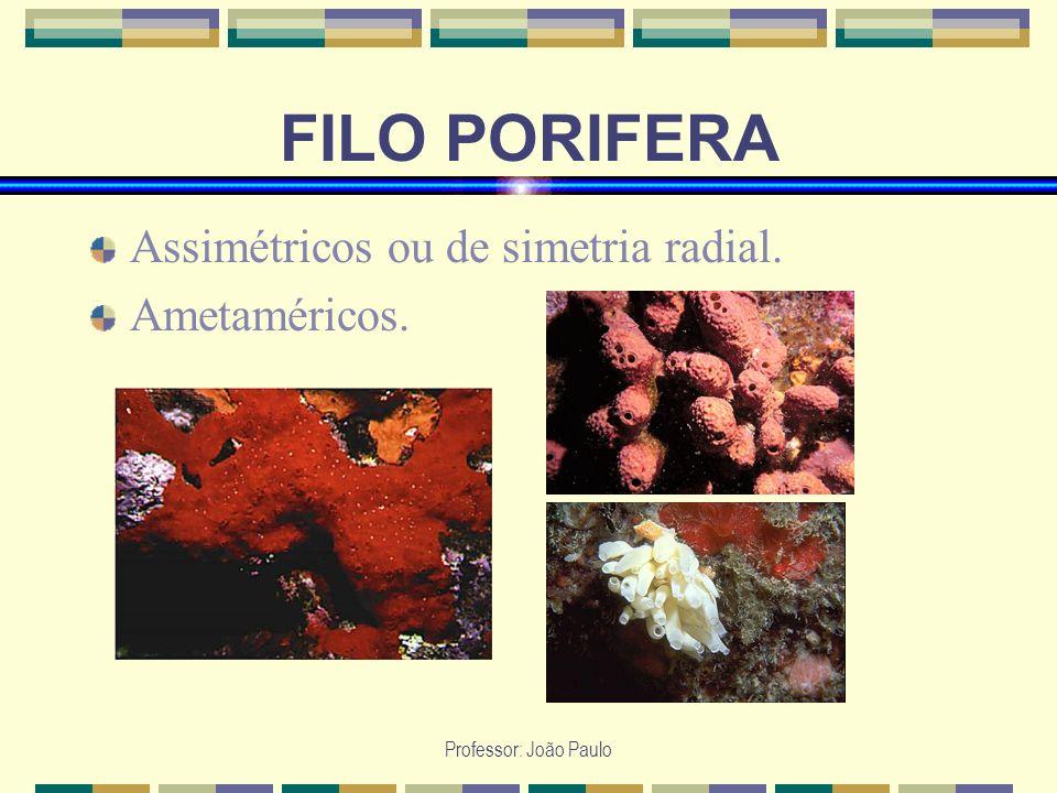 Professor: João Paulo FILO PORIFERA Apresentam no á pice do corpo uma abertura denominada ó sculo, que não corresponde à boca.