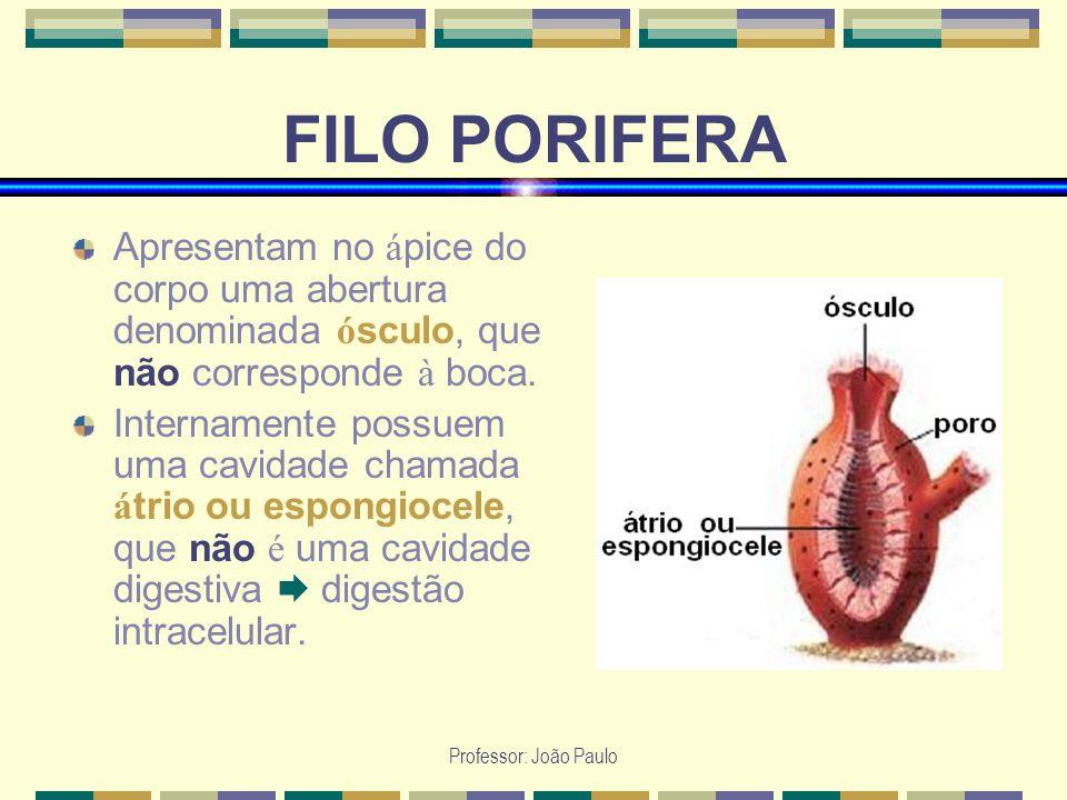 Professor: João Paulo FILO PORIFERA Apresentam no á pice do corpo uma abertura denominada ó sculo, que não corresponde à boca. Internamente possuem um