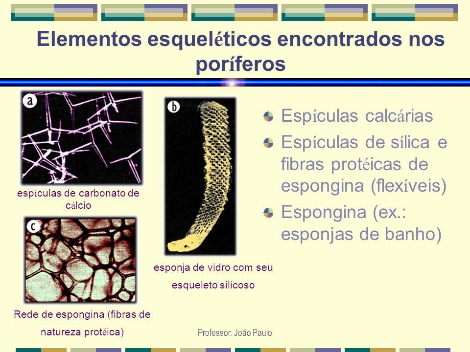 Professor: João Paulo Elementos esquel é ticos encontrados nos por í feros Esp í culas calc á rias Esp í culas de s í lica e fibras prot é icas de esp