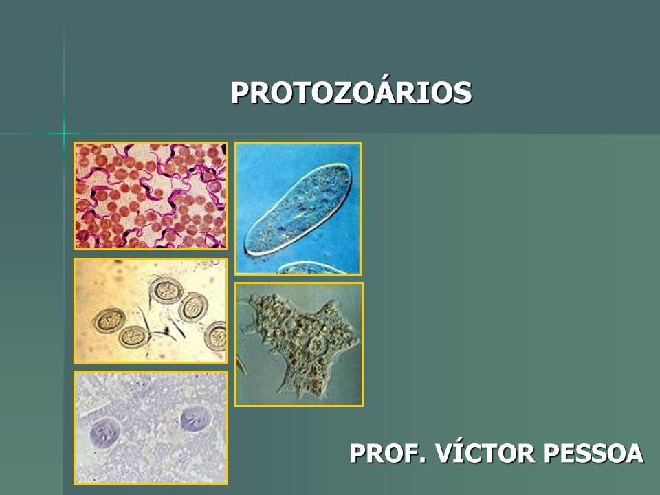 PROTOZOÁRIOS PROF. VÍCTOR PESSOA