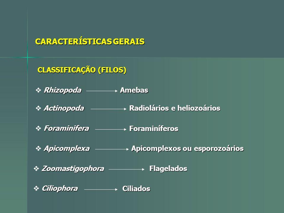 CARACTERÍSTICAS GERAIS CLASSIFICAÇÃO (FILOS) Rhizopoda Amebas Actinopoda Radiolários e heliozoários Foraminifera Foraminíferos Apicomplexa Apicomplexo