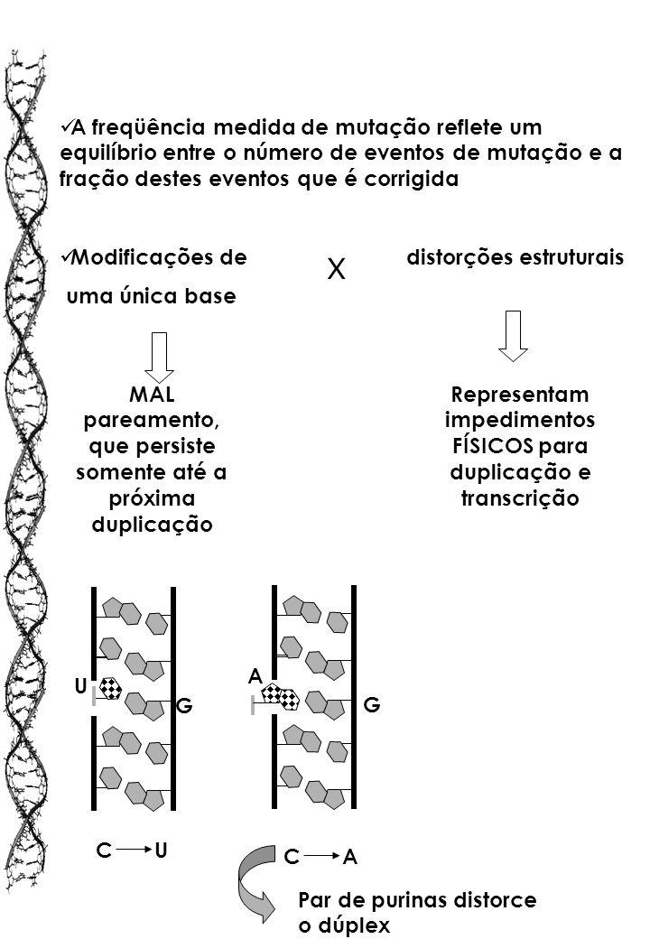 A freqüência medida de mutação reflete um equilíbrio entre o número de eventos de mutação e a fração destes eventos que é corrigida Modificações de di