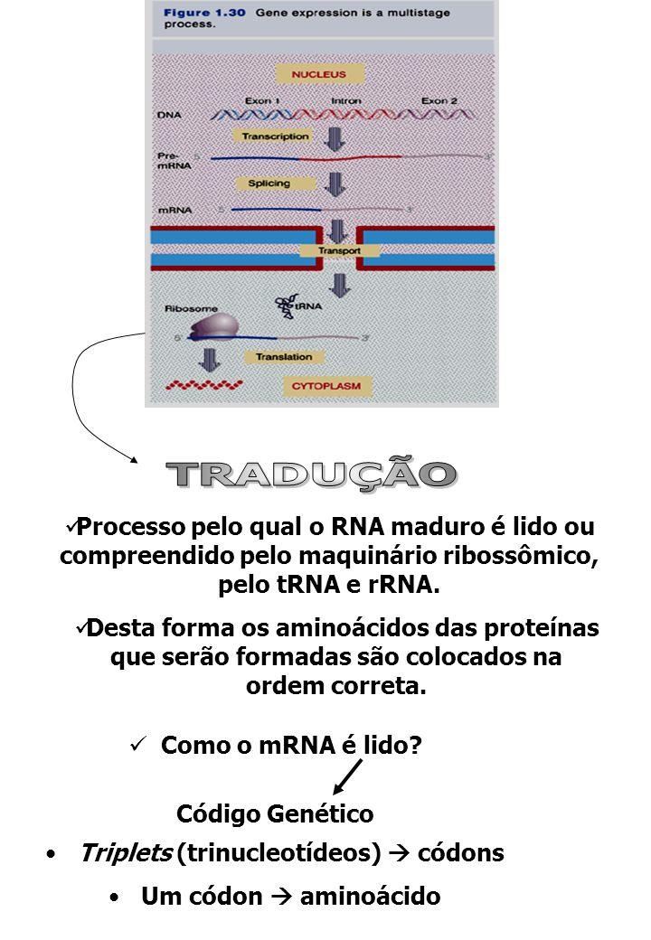 -Universal -Degenerado Códon de iniciação: AUG (metionina) Códons de terminação: UAA, UGA e UAG Estruturas necessárias a tradução RNA mensageiro (mRNA) RNA transportador (tRNA) Ribossomos (rRNA+proteínas) Moléculas Adaptadoras: tRNAs Transfere a informação contida no genoma a uma sequência de aminoácidos 1