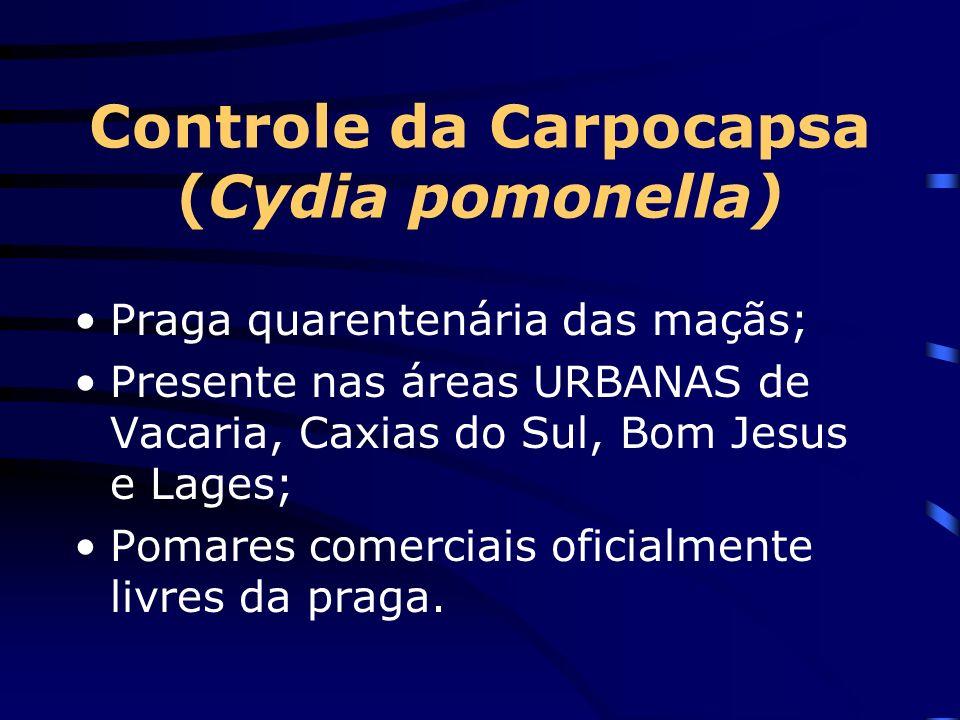 Controle da Carpocapsa (Cydia pomonella) Praga quarentenária das maçãs; Presente nas áreas URBANAS de Vacaria, Caxias do Sul, Bom Jesus e Lages; Pomar