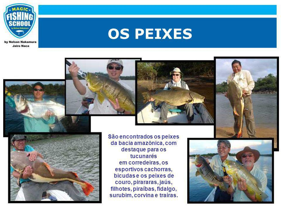 OS PEIXES São encontrados os peixes da bacia amazônica, com destaque para os tucunarés em corredeiras, os esportivos cachorras, bicudas e os peixes de