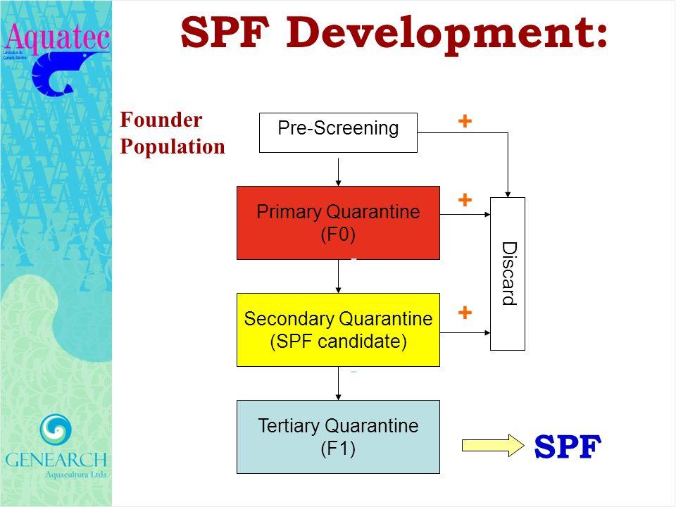 Founder Population Primary Quarantine (F0) Secondary Quarantine (SPF candidate) Tertiary Quarantine (F1) Pre-Screening Discard - + - + + SPF SPF Devel