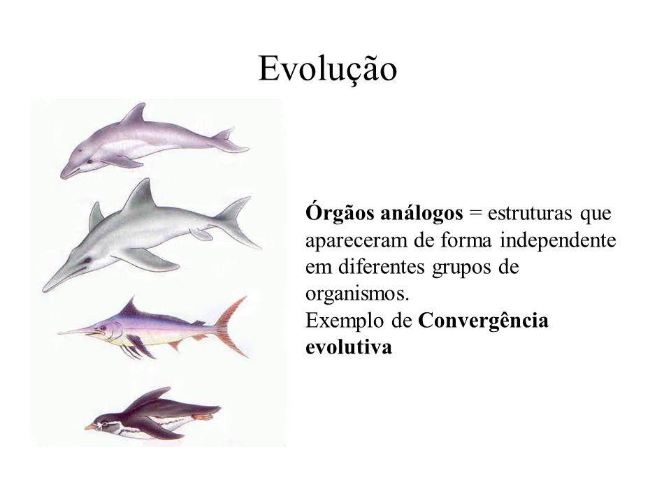 Órgãos análogos = estruturas que apareceram de forma independente em diferentes grupos de organismos. Exemplo de Convergência evolutiva Evolução