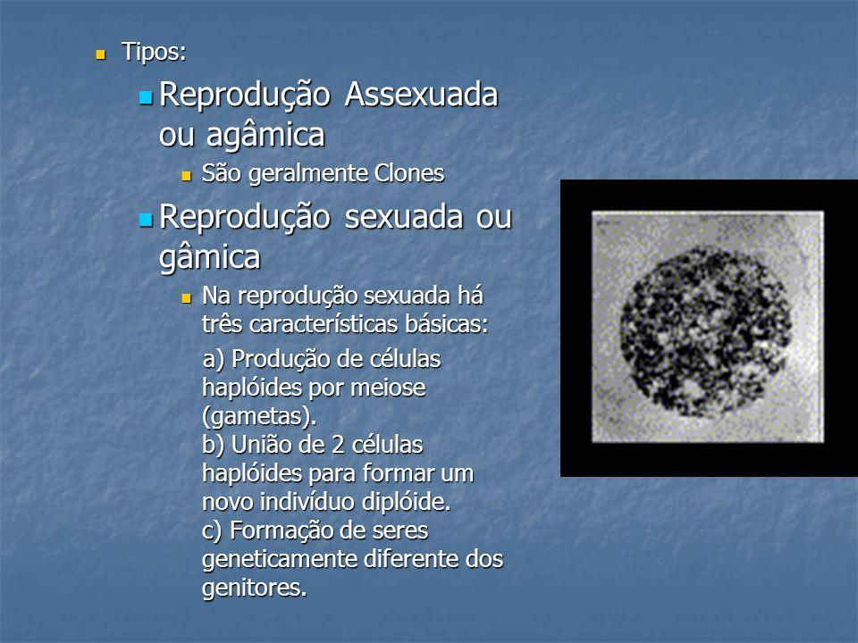 Tipos: Tipos: Reprodução Assexuada ou agâmica Reprodução Assexuada ou agâmica São geralmente Clones São geralmente Clones Reprodução sexuada ou gâmica