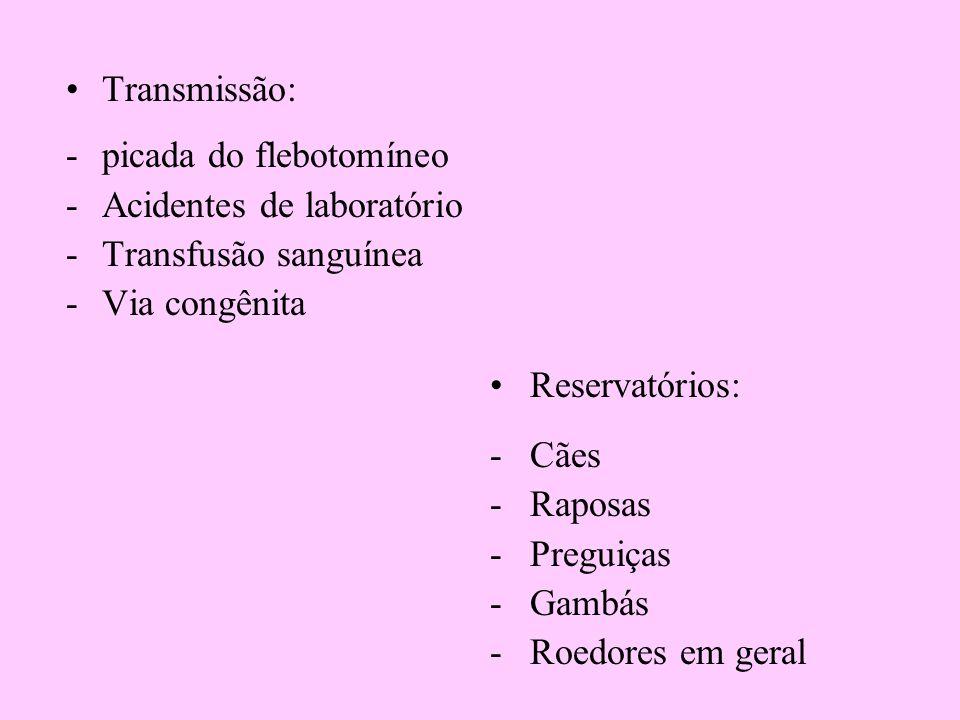 Transmissão: -picada do flebotomíneo -Acidentes de laboratório -Transfusão sanguínea -Via congênita Reservatórios: -Cães -Raposas -Preguiças -Gambás -