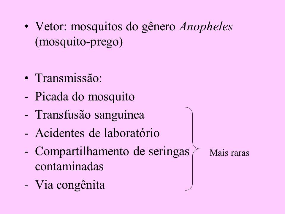 Vetor: mosquitos do gênero Anopheles (mosquito-prego) Transmissão: -Picada do mosquito -Transfusão sanguínea -Acidentes de laboratório -Compartilhamen