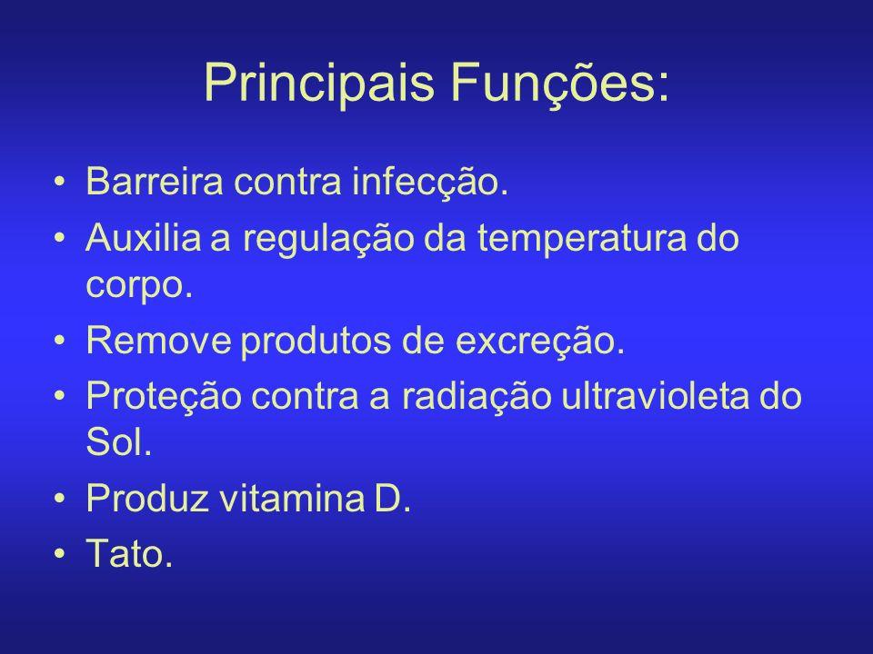 Principais Funções: Barreira contra infecção. Auxilia a regulação da temperatura do corpo. Remove produtos de excreção. Proteção contra a radiação ult
