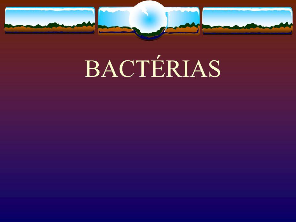 CARACTERIZAÇÃO GERAL O Reino Monera é formado por organismos procariontes, como as bactérias e cianobactérias (cianoficeas ou algas azuis )