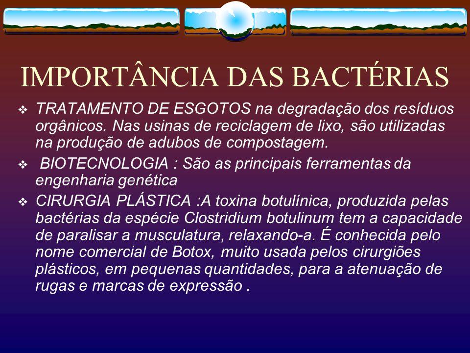 IMPORTÂNCIA DAS BACTÉRIAS TRATAMENTO DE ESGOTOS na degradação dos resíduos orgânicos. Nas usinas de reciclagem de lixo, são utilizadas na produção de