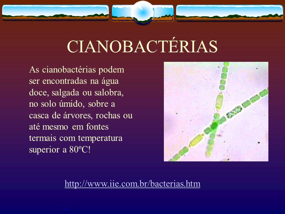 CIANOBACTÉRIAS http://www.iie.com.br/bacterias.htm. As cianobactérias podem ser encontradas na água doce, salgada ou salobra, no solo úmido, sobre a c