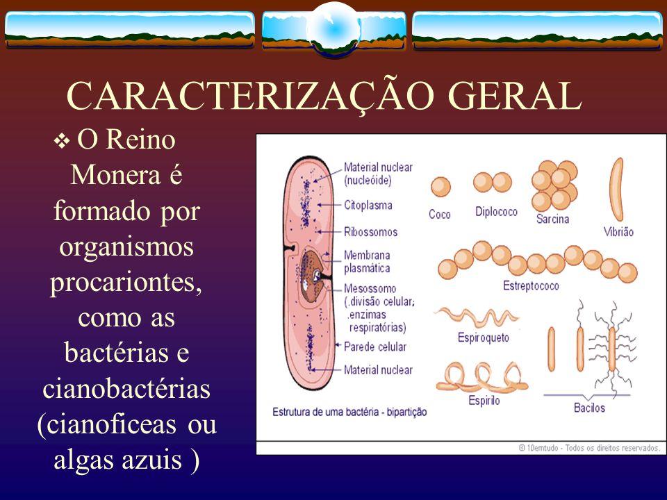 CARACTERIZAÇÃO GERAL As bactérias são os menores e mais simples seres vivos que primeiro habitaram o planeta há cerca de 2 bilhões de anos, originando todos os demais seres vivos.