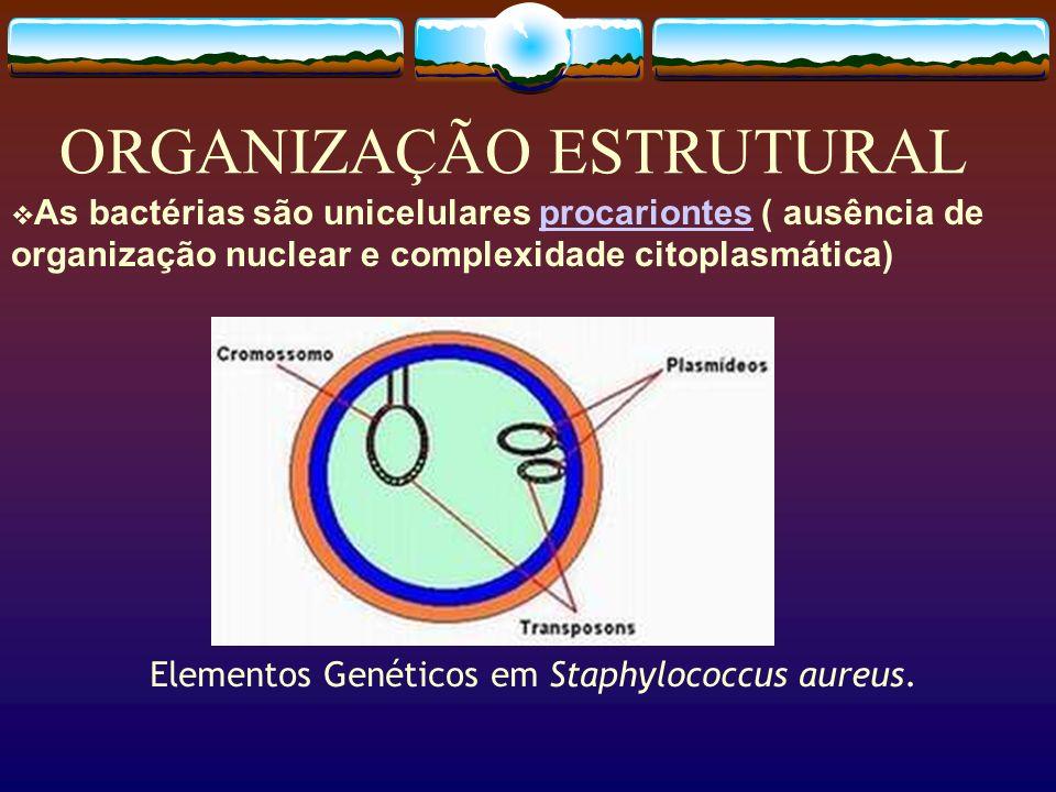 ORGANIZAÇÃO ESTRUTURAL As bactérias são unicelulares procariontes ( ausência de organização nuclear e complexidade citoplasmática)procariontes Element