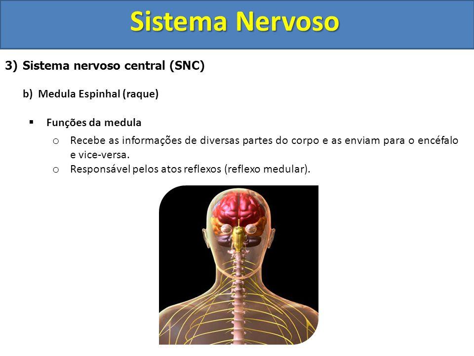 Sistema Nervoso 3)Sistema nervoso central (SNC) b) Medula Espinhal (raque) Funções da medula o Recebe as informações de diversas partes do corpo e as