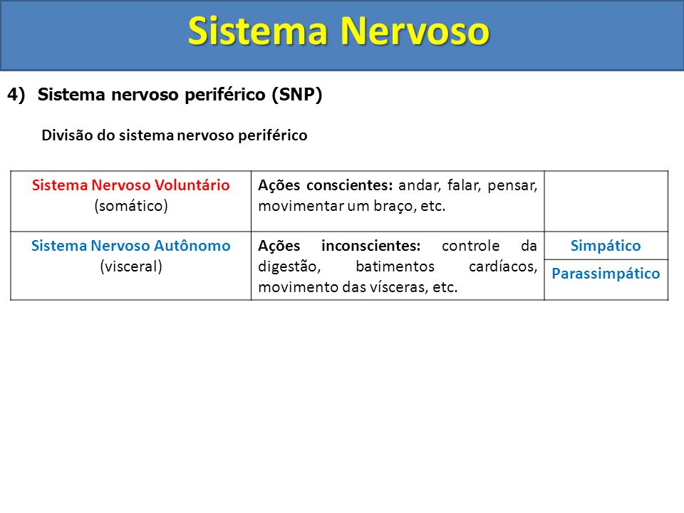 Sistema Nervoso 4) Sistema nervoso periférico (SNP) Divisão do sistema nervoso periférico Sistema Nervoso Voluntário (somático) Ações conscientes: and