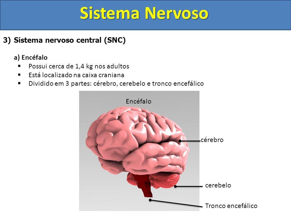 Sistema Nervoso 3)Sistema nervoso central (SNC) a) Encéfalo Possui cerca de 1,4 kg nos adultos Está localizado na caixa craniana Dividido em 3 partes: