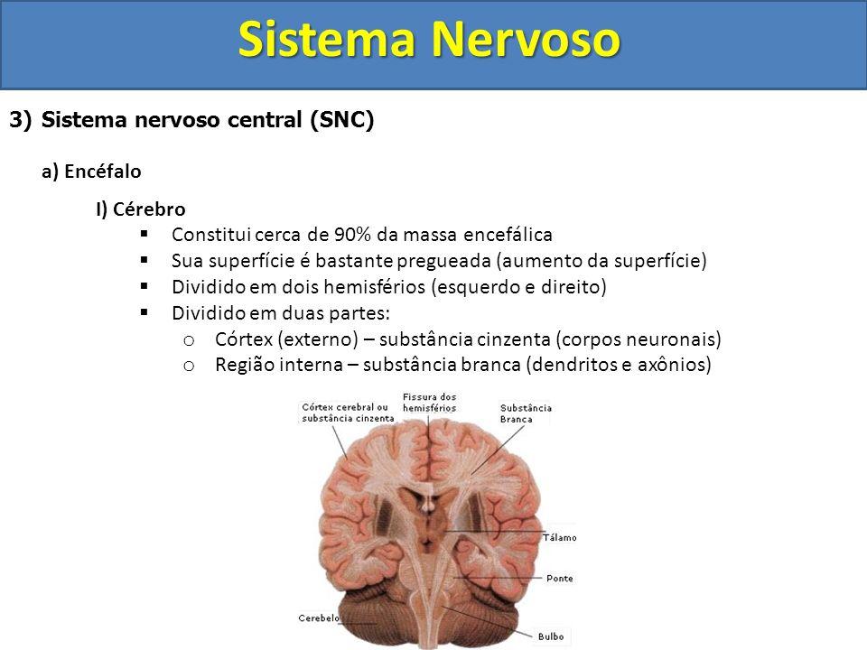 Sistema Nervoso 3)Sistema nervoso central (SNC) a) Encéfalo I) Cérebro Constitui cerca de 90% da massa encefálica Sua superfície é bastante pregueada