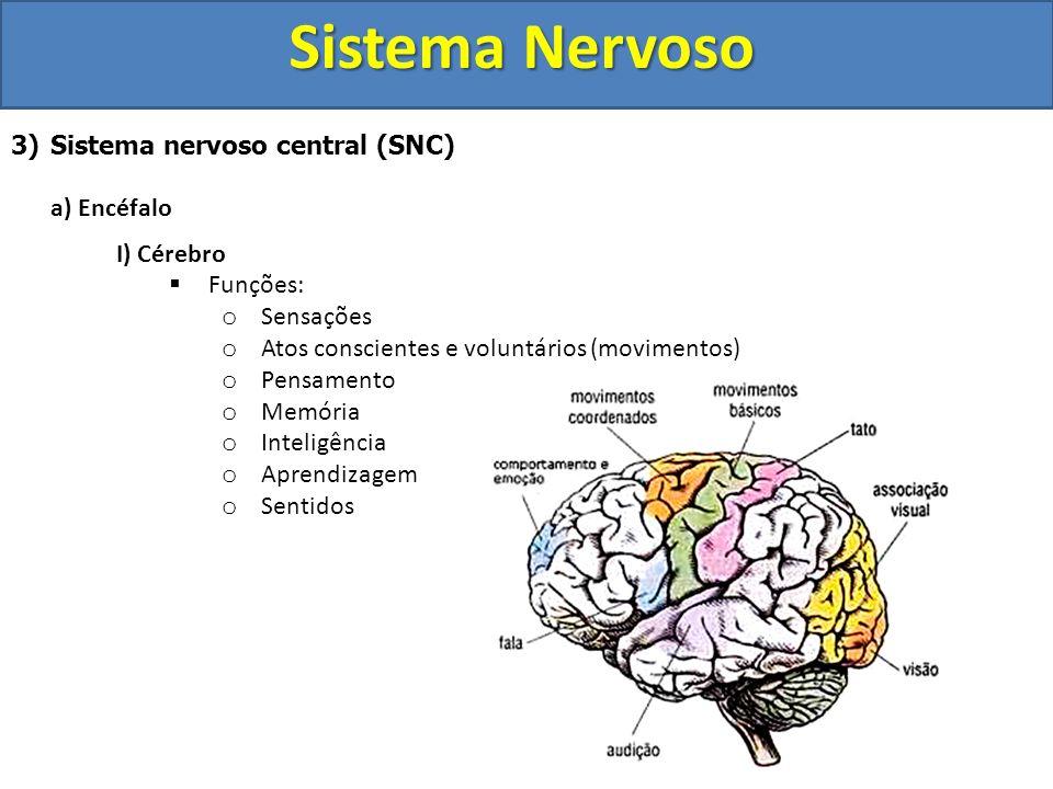 Sistema Nervoso 3)Sistema nervoso central (SNC) a) Encéfalo I) Cérebro Funções: o Sensações o Atos conscientes e voluntários (movimentos) o Pensamento
