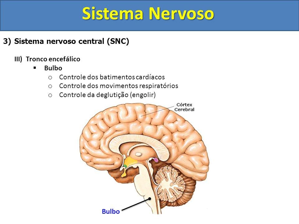 Sistema Nervoso 3)Sistema nervoso central (SNC) III) Tronco encefálico Bulbo o Controle dos batimentos cardíacos o Controle dos movimentos respiratóri