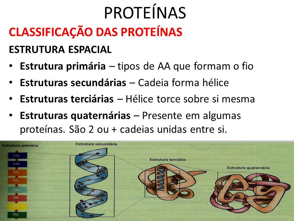 PROTEÍNAS CLASSIFICAÇÃO DAS PROTEÍNAS ESTRUTURA ESPACIAL Estrutura primária – tipos de AA que formam o fio Estruturas secundárias – Cadeia forma hélic
