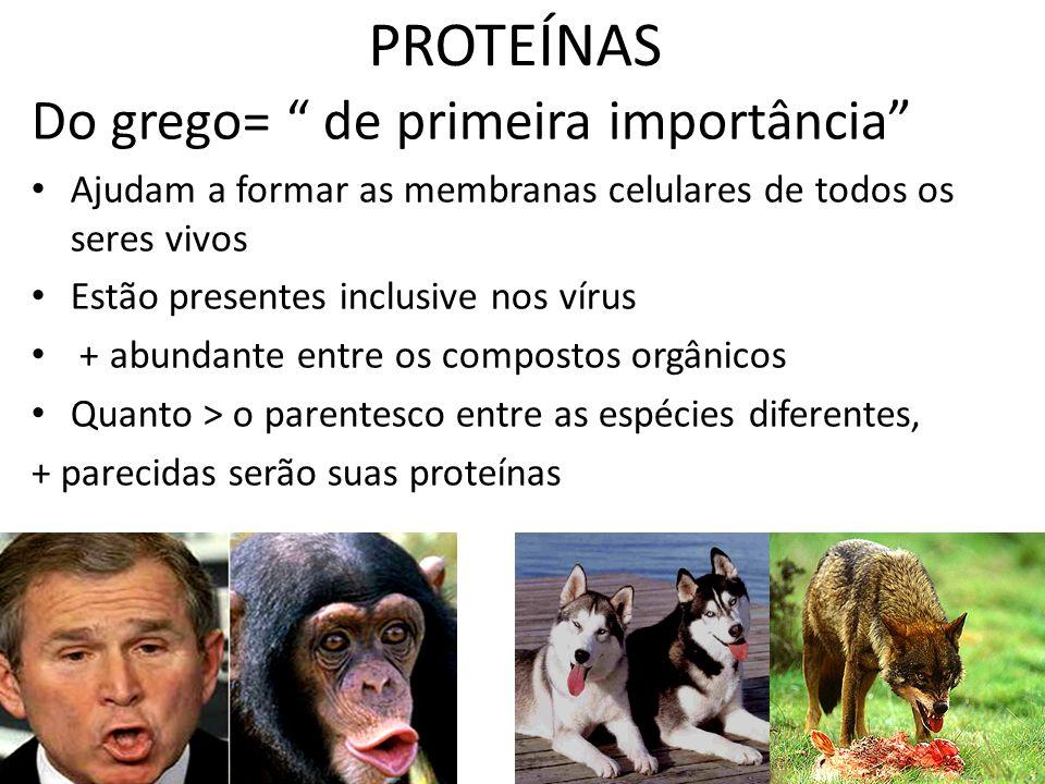PROTEÍNAS Do grego= de primeira importância Ajudam a formar as membranas celulares de todos os seres vivos Estão presentes inclusive nos vírus + abund