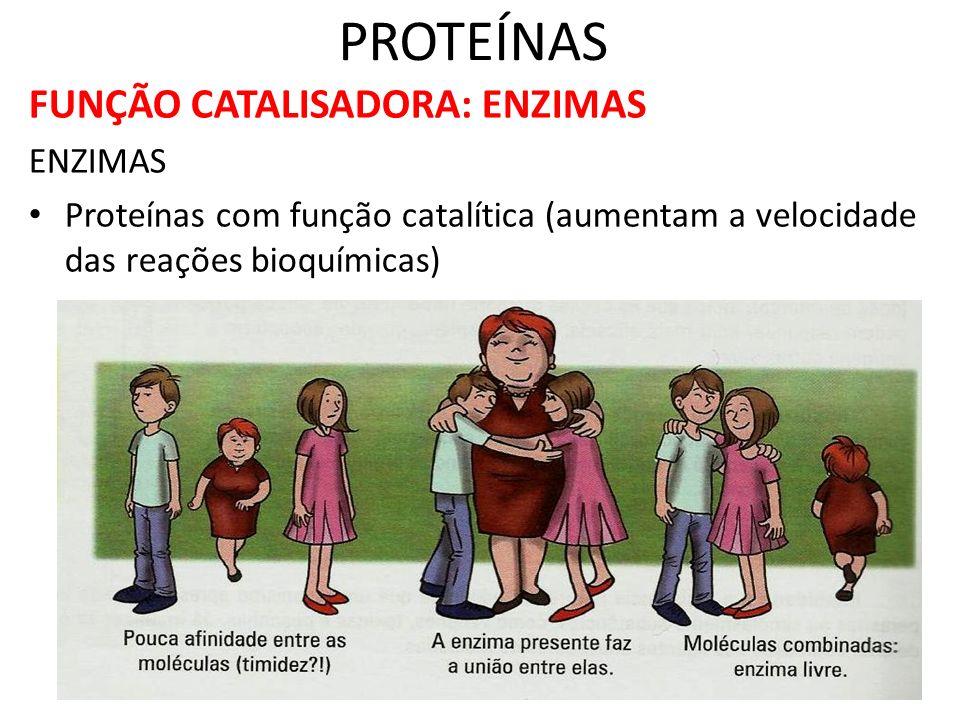 PROTEÍNAS FUNÇÃO CATALISADORA: ENZIMAS ENZIMAS Proteínas com função catalítica (aumentam a velocidade das reações bioquímicas)
