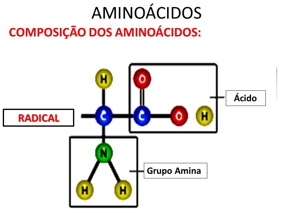 AMINOÁCIDOS COMPOSIÇÃO DOS AMINOÁCIDOS: Grupo Amina Ácido RADICAL