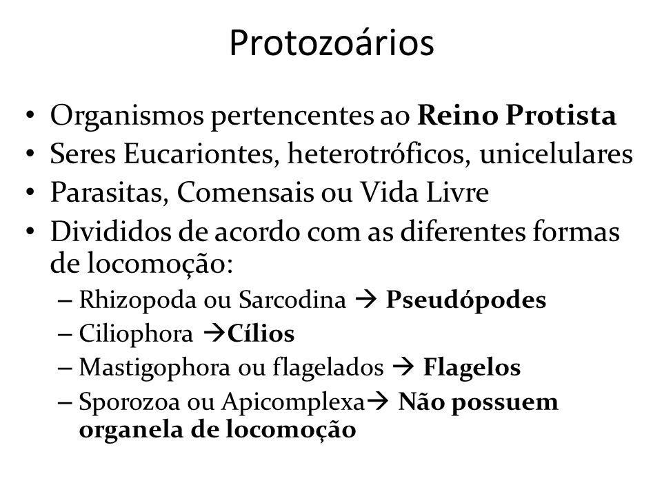 Protozoários Organismos pertencentes ao Reino Protista Seres Eucariontes, heterotróficos, unicelulares Parasitas, Comensais ou Vida Livre Divididos de